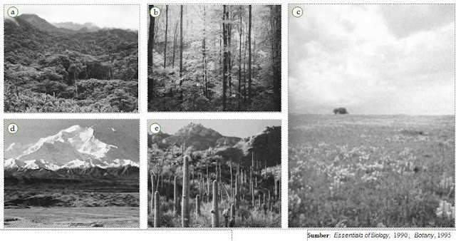 Contoh jenis bioma. (a)  Bioma  hutan hujan, (b) bioma hutan gugur daun, (c)  bioma savana,  (d)  bioma tundra, dan  (e)  bioma gurun.