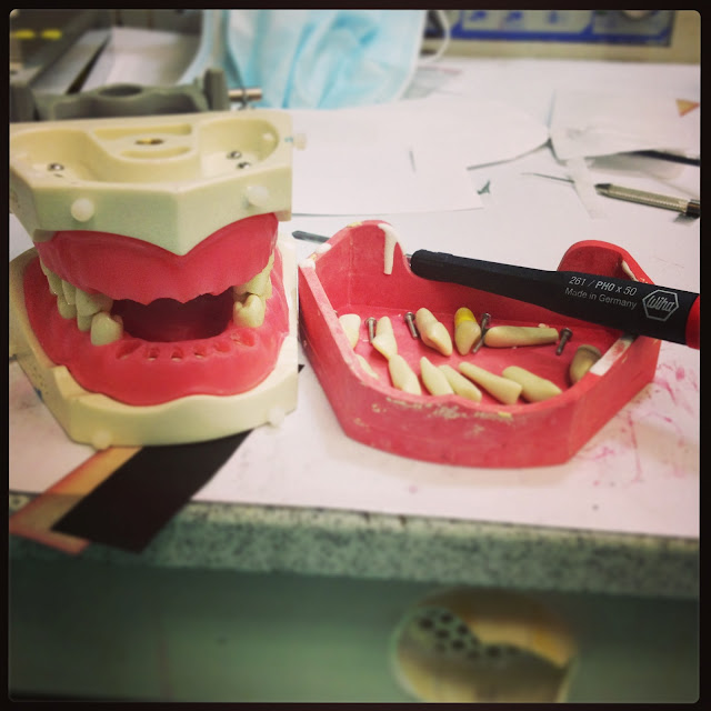 dental school equilibrating typodonts