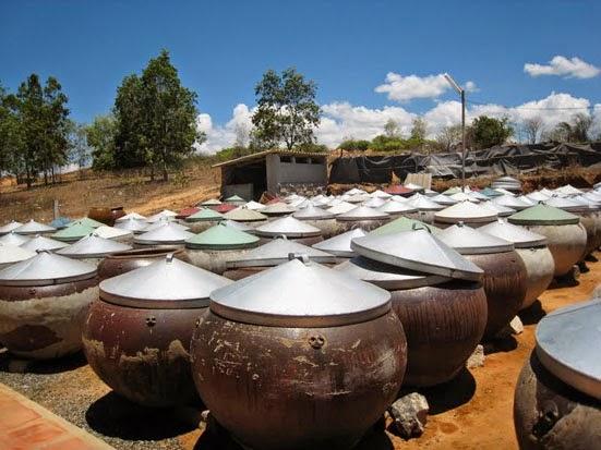 Salted Anchovy in Phú Yên Province (Mắm Cá Cơm)4