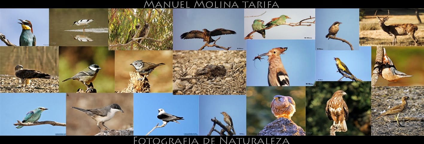 Manuel Molina - Fotografo de campo
