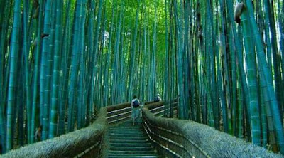 Bamboo Footpath in Japan