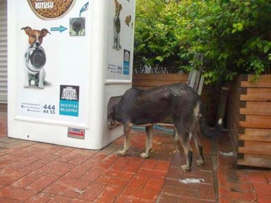 This New And Amazing Machine Feeds Homeless Animals