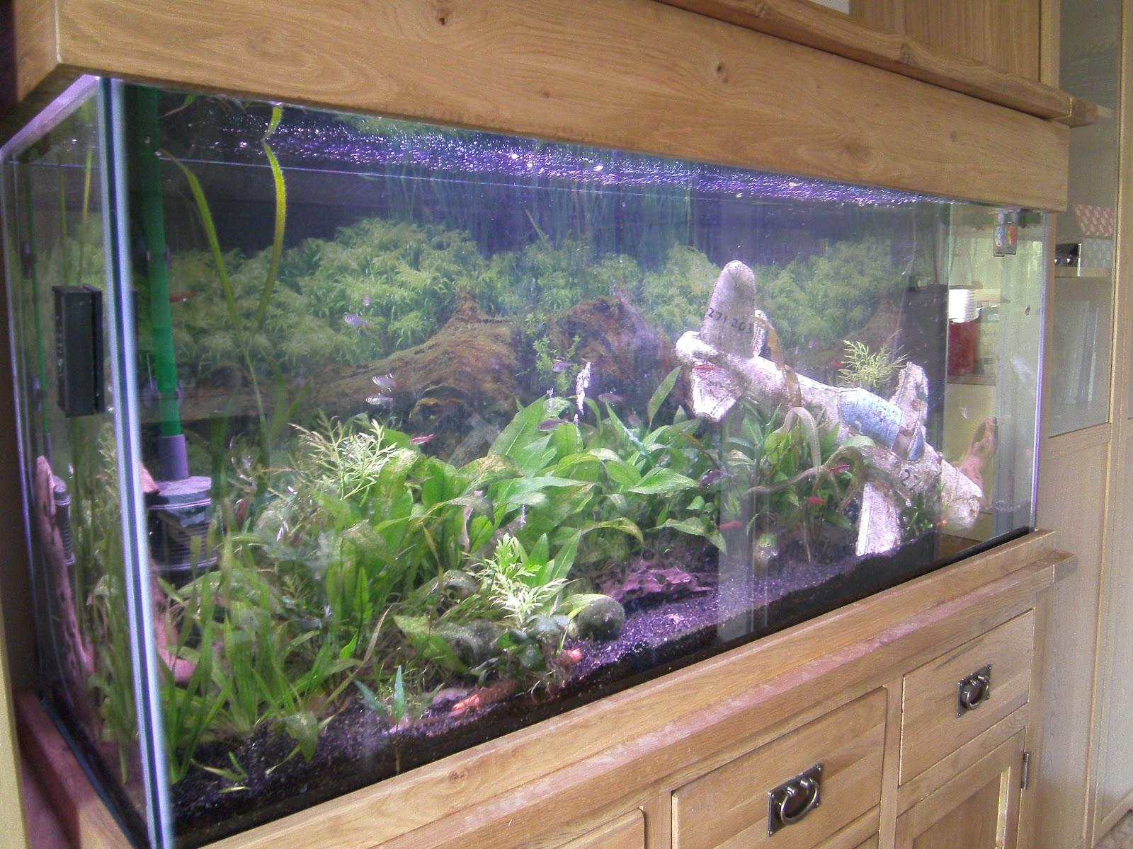 Most Beautiful Fish Tanks It is really beautiful.