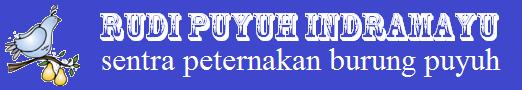 Rudi Puyuh Indramayu