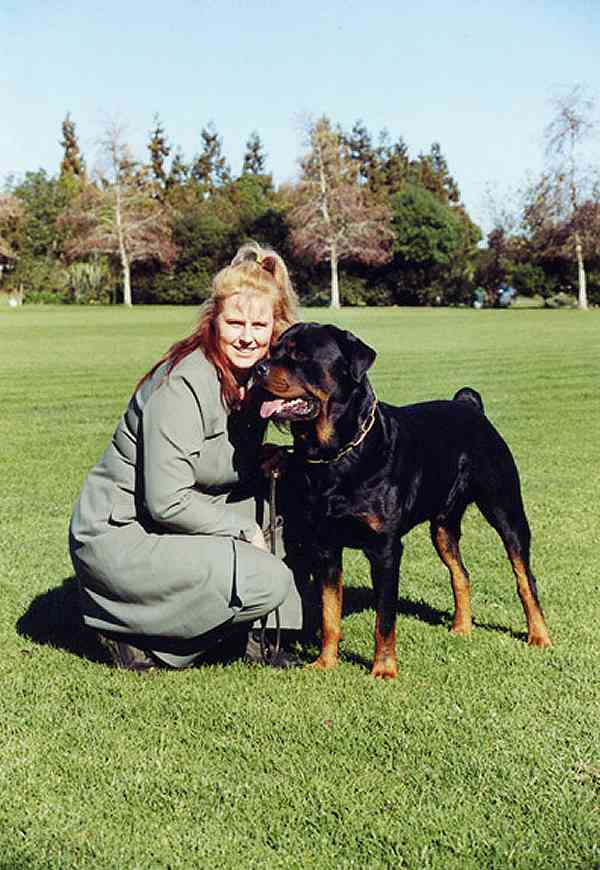 Rottweilers Size Ibovnathandedecker