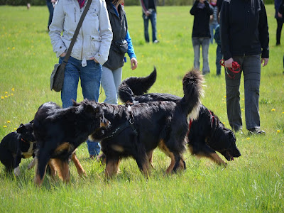 Dog Guards Treffen