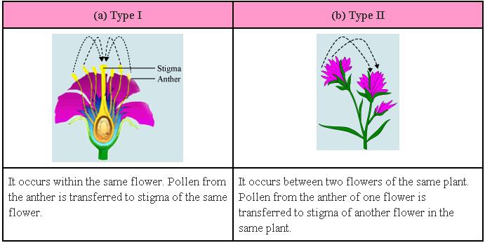 What Is Cross Fertilization  Letters