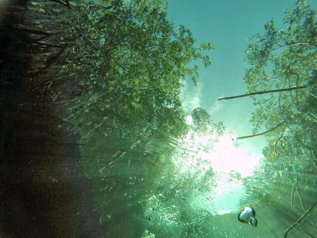 Cenote Manatí. Casa Cenote. Tankha. Javier Girón
