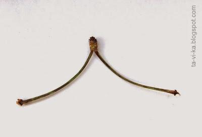 хвостик от черешни