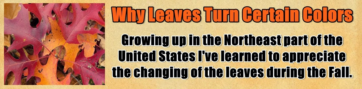 http://www.nerdoutwithme.com/2013/10/why-leaves-turn-certain-colors.html