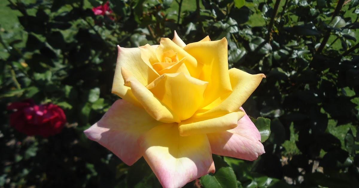 Nos exportamos para Austrália Jardim das Rosas