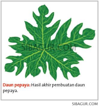 Melukis-Pepaya-Digital-Paint