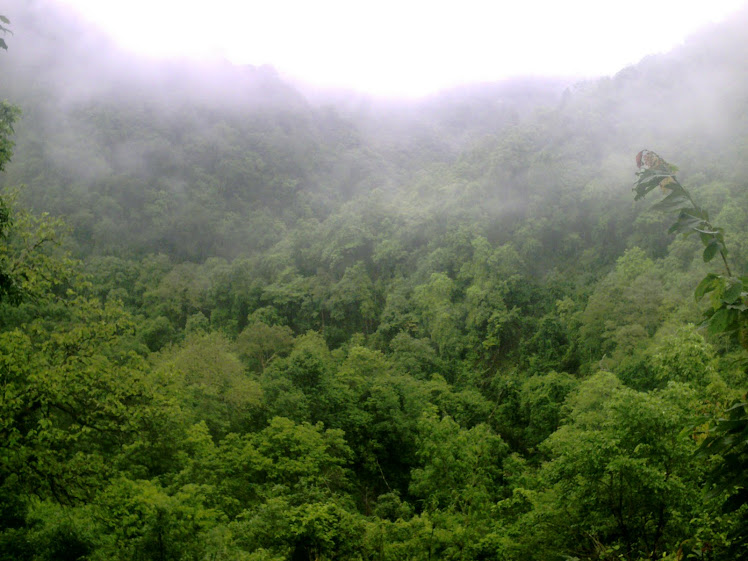 A Typical File Photo of Moist Deciduous Forests in Dandeli-Anshi Tiger Reserve: