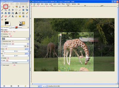 GIMP's Ellipse Select Tool