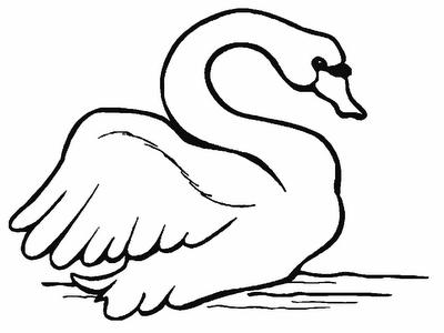 Desenho de Cisne para colorir