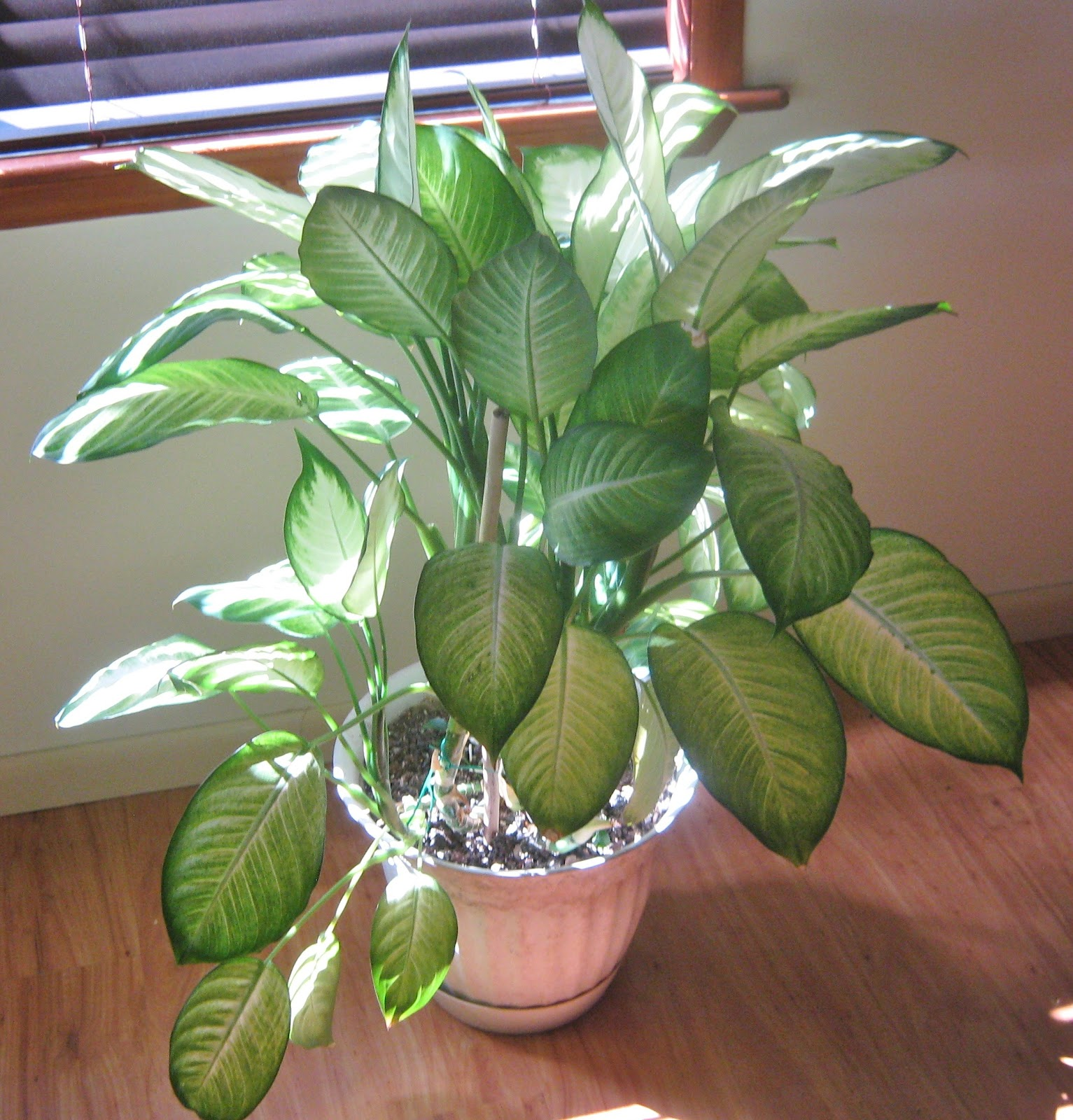 living stingy: the secret to houseplants