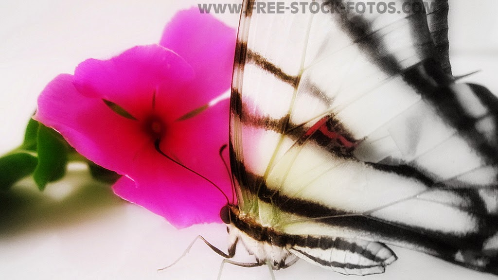 Butterfly and flower photo