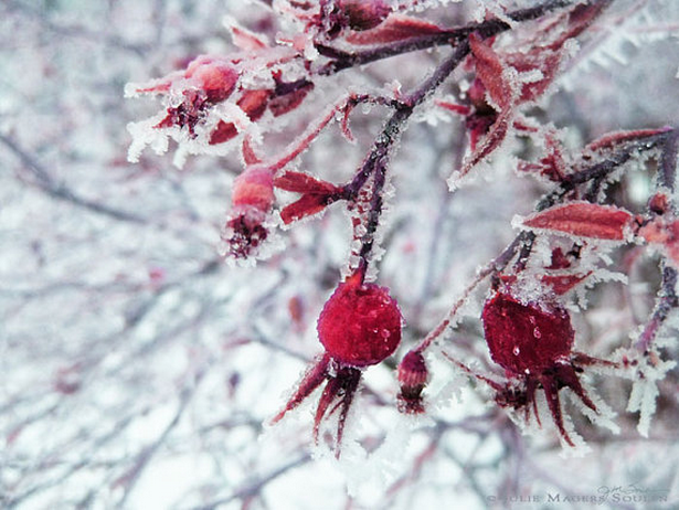 Tribute to January ~ Garnet #january #birthstone #garnet #red