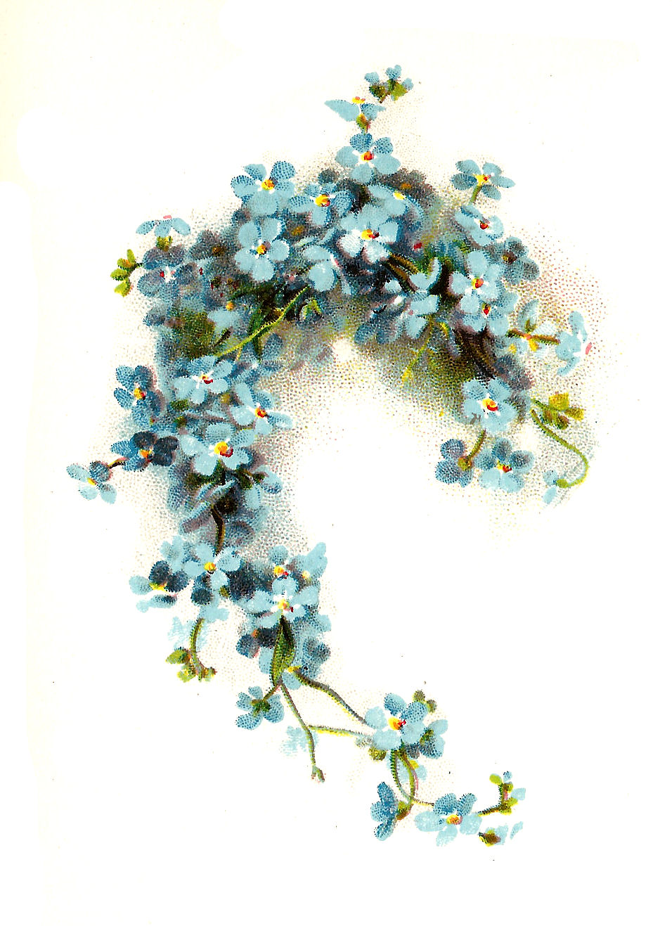 Flower Clip Art: Blue ForgetMeNot Flower Graphic from Wedding Book