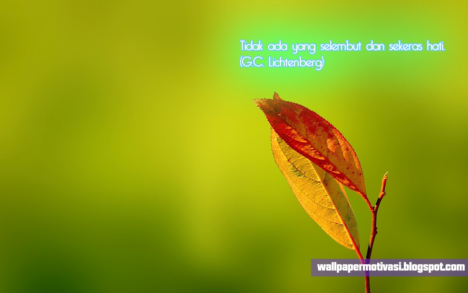 http://4.bp.blogspot.com/-KKiNEvvRaIw/UC8q-PD4IBI/AAAAAAAAAGc/-cE8w2-Pk7g/s1600/hati+keras+lembut+desktop.jpg