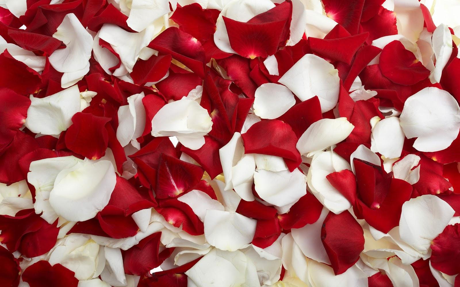 Red Rose Petals Wallpaper