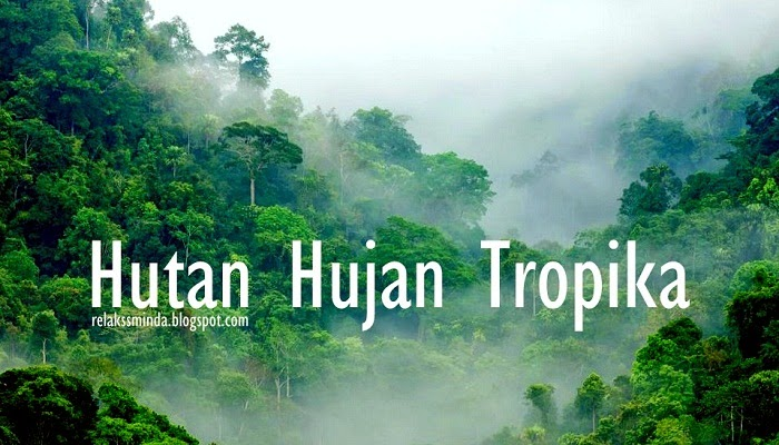 Menikmati Keindahan Alam dan Berekreasi di Hutan Lipur
