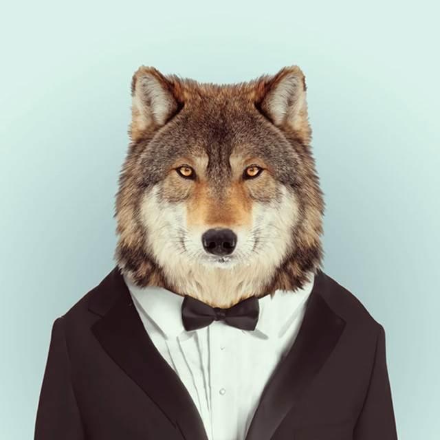 serigala-pakai-tuksedo