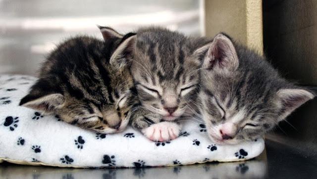 три котёнка спят друг с другом