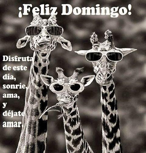 Feliz Domingo Imagenes