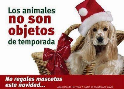Los animales NO son objetos de temporada...