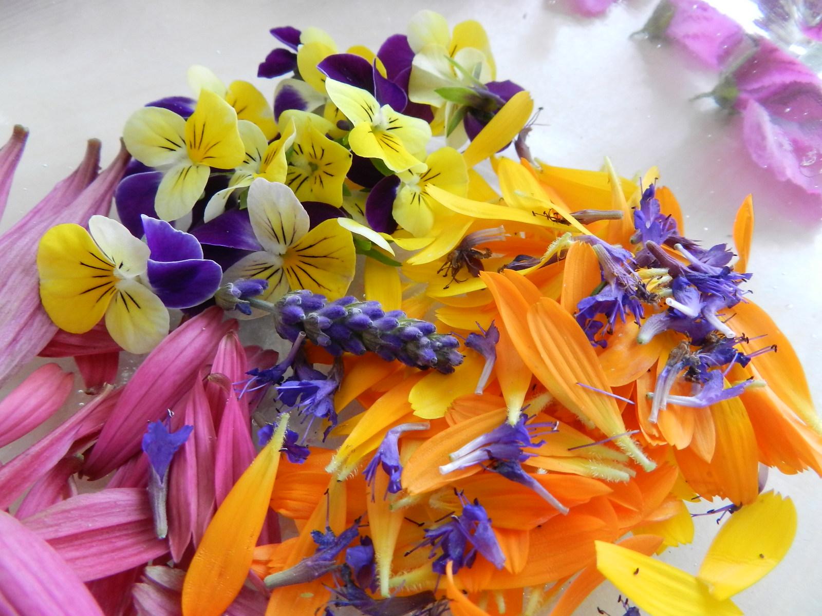 Getrocknete Blüten aja die geschichte aus dem wald