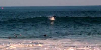 イルカとサーファー