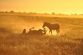 Namibia I - Nordosten
