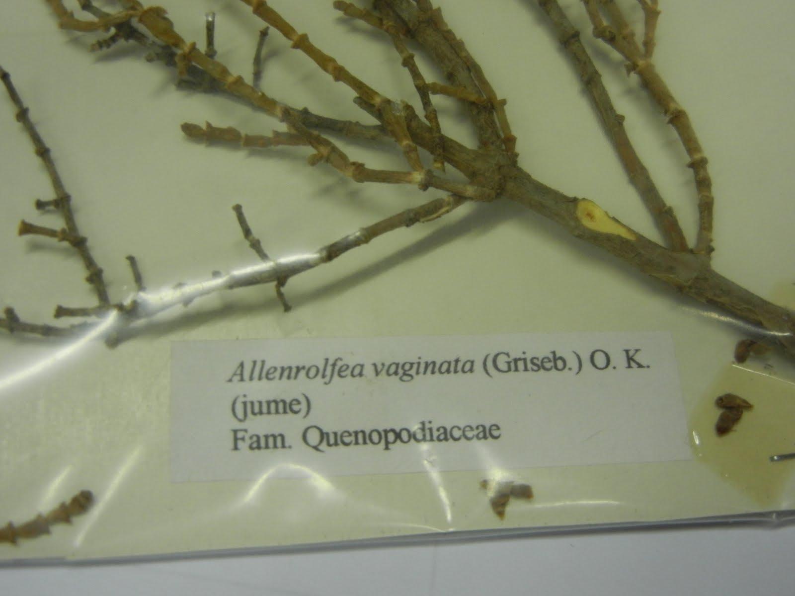 Adaptaciones Morfológicas de las Plantas Vasculares
