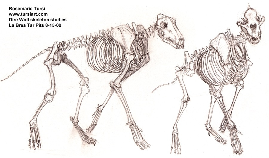 Alex Dawes Illustration The Anatomy Of A Wolf Bone Structure Part