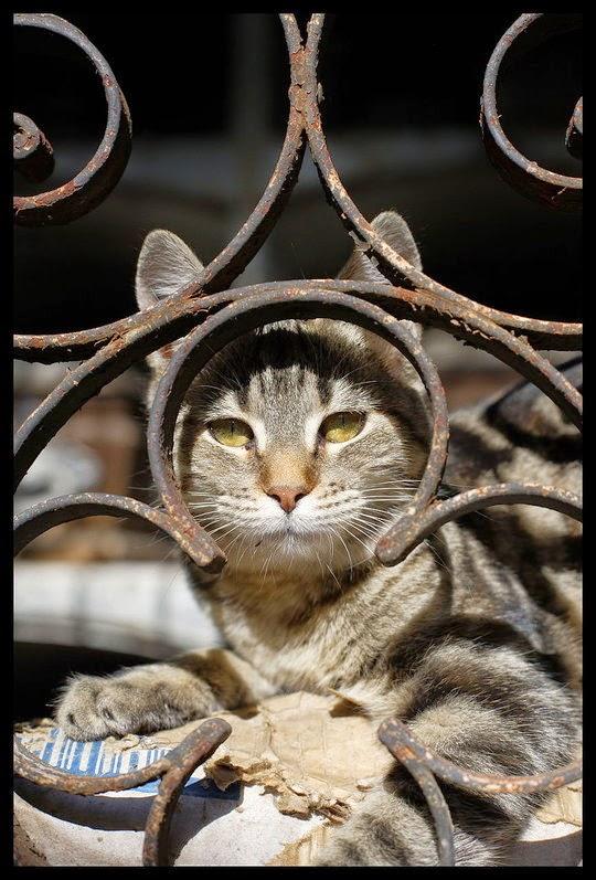 recoleta cemetery cats