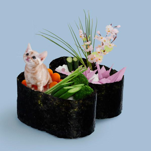 кошка и суши