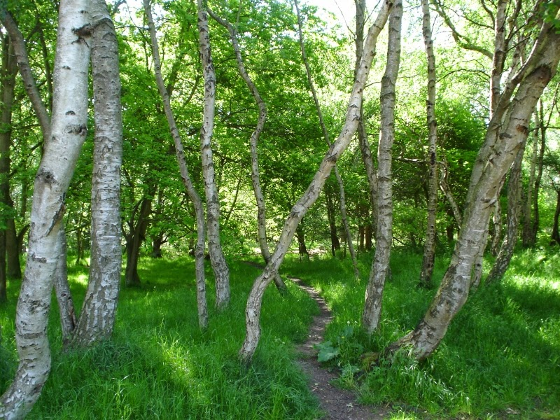 Encuentran a una chica sola en el bosque y se la follan