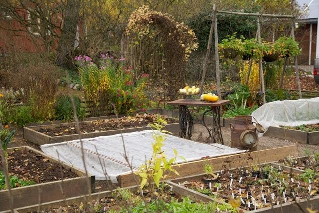 Höstsådd av grönsaker att skörda till våren hos rost och rädisor