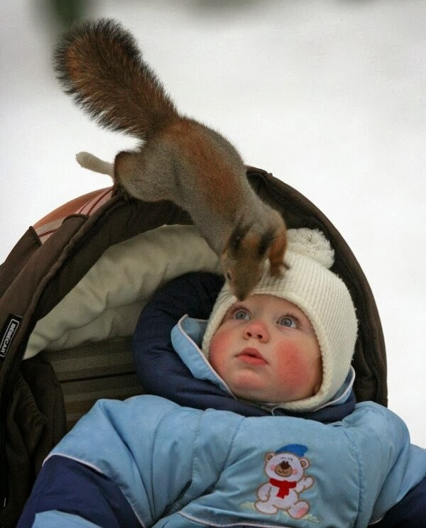 Funny animals of the week - 31 January 2014 (40 pics), squirrel investigates a human baby