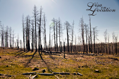 Kaibab National Forest fire Arizona, New Braunfels photography