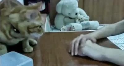 gato sabe pedir favor
