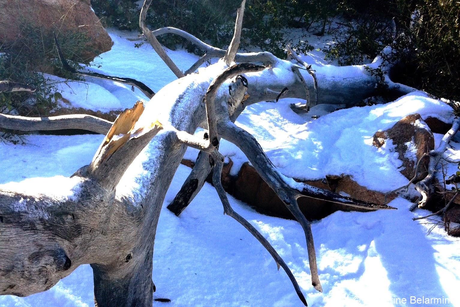 Snow on a Fallen Tree on San Diego's Stonewall Peak Hiking Trail