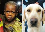 Turco, un perro abandonado que salvo 18 vidas en Haiti
