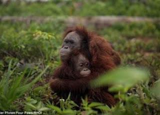 6 Hewan Langka Yang Ada Di Indonesia