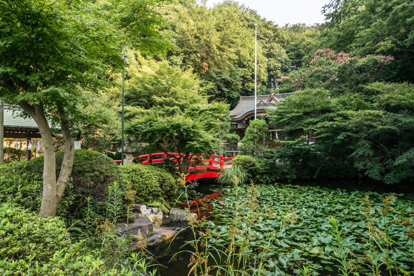 貫井神社、神橋とコウホネが自生する池の写真