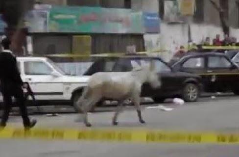بالفيديو: ظابط يطارد حمارا حاول تفجير قنبلة في ذكرى 25 يناير بمصر