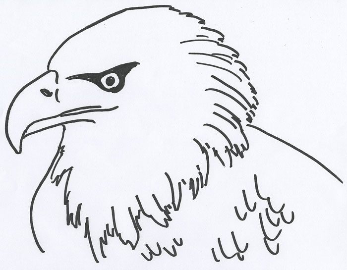 coloring book page for an american bald eagles head