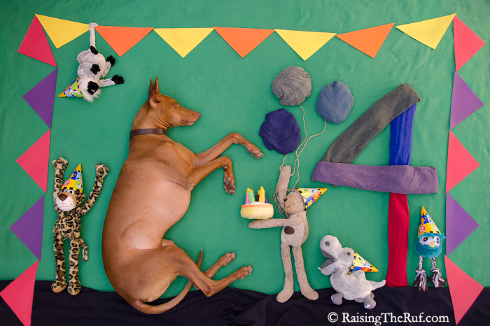 pharaoh hound dog birthday cake