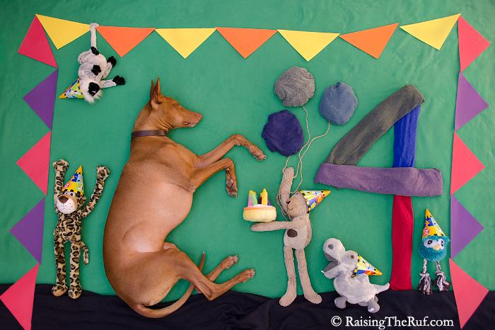 pharaoh hound dog birthday cake